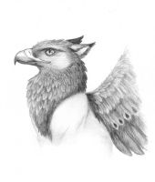 Gryphon Sketch by Skyelar