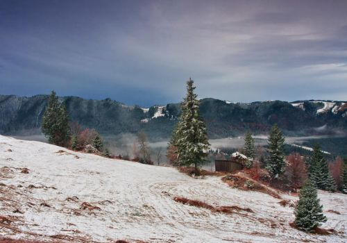 From Bukovina. by lica20