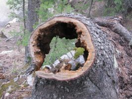 Hole in a tree-Stock by Swordexpert-Stock