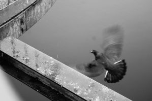 Pigeon by Buggie1112