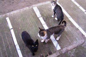 3 cats by black-cat16-stock