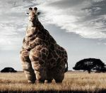 FAT giraffe by avajie