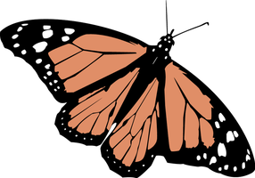 Vector Butterfly by AmblingPhotographer
