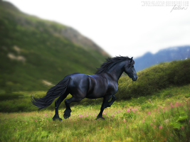 Black Beauty by hp-fallenangel