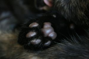 paw pads by thom-cat