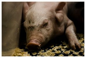 Untitled-pig-project by nonphotoblue