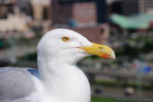 Friendly seagull 2 by imonline