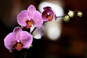 Orchide by accessQ