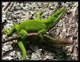 Green Anoles 40D0004391 by Cristian-M