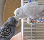Clark and Winter Preening Eachother 4b by Windthin