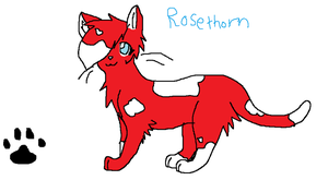 Rosethorn (Another one of my warriors) by Aura-Q