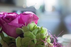 Pink roses by sweeti800
