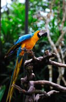 a colorful parrot by GregoriusSuhartoyo