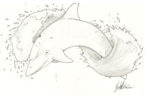 Dolphin by GeneWallace