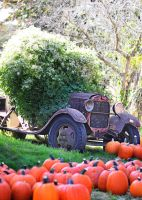 Scott's Orchards Truck by chilihook