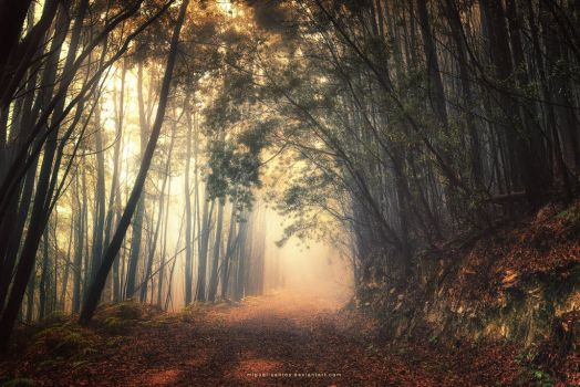 Into the Sacred by Miguel-Santos