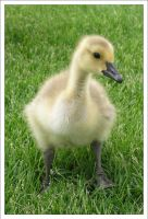 everything is just quack by Antosia