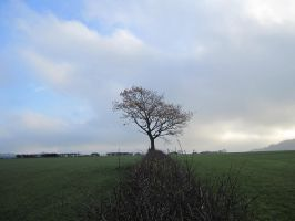 hedgerow and a tree by yougottalovetwilight