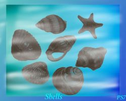 Sea shells brushes by ElizavetBrushes