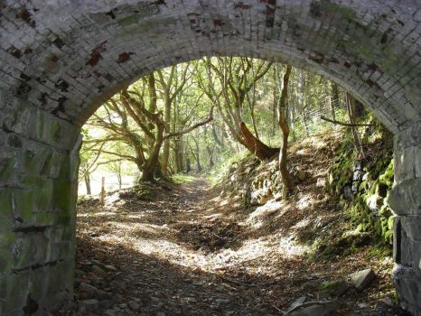 Old tunnel and cattle track by rodellis