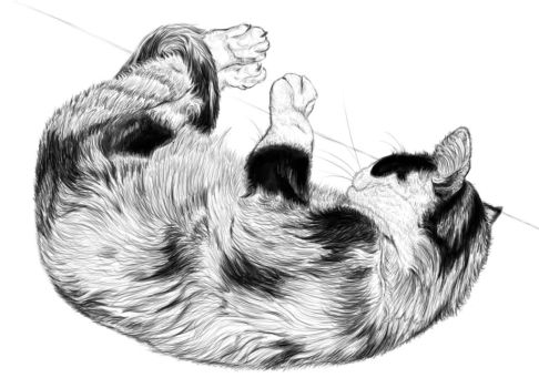 Digital drawing practice: cat's fur by Ae0nianDreams