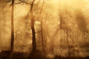 6.8.2013: Light in the Forest by Suensyan