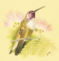 Ruby throated Hummingbird by Ned-The-Hat