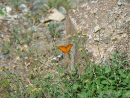 Little Butterfly by Tymuthus