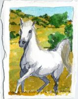 Shadowfax, prince of horses by crisurdiales