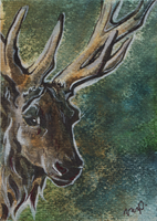aceo for suzannelaither by kailavmp