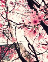 Cherry Blossom by NatalieNANA