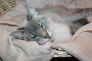 my cat by taevans