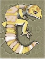 Albino Leopard Gecko by Experiment5949