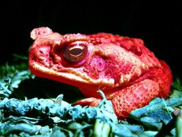 Color Scheme Frog 2 by PainlessJames