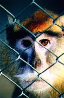 Monkey in the Cage by RameyOnWheels