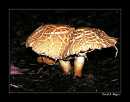 On the Forest Floor II by David-A-Wagner
