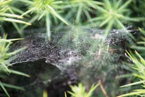 The Webs We Weave by Phuppet