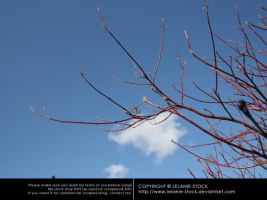 Branches 002 by Lelanie-Stock