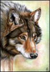 Wolf Chant. by Vanare