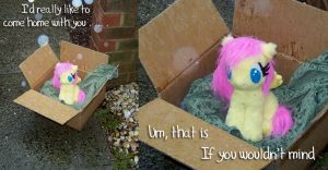 Fluttershy in a box by Voodoo-Tiki
