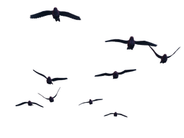 Flying Birds 07 PNG Stock by Roys-Art