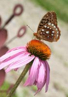 Floer and butterfly by debgay
