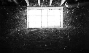 The Web by EllipticalSpace