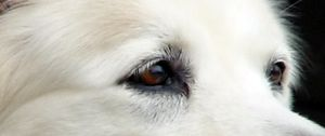 Kat Stock 183 -Wolf Eyes by Kaitrosebd-Stock
