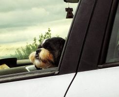 the co pilot by awjay