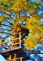 Our Treehouse Built by My Husband {Photo 30} by Empress-XZarrethTKon