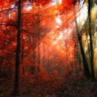costume by ildiko-neer
