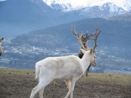 White Deer 2 by wildthyme-stock
