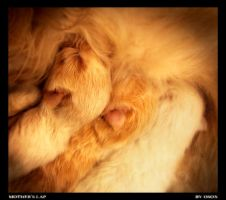 Mother's Lap by Osox