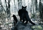 I Was a Black Cat. II by static--death